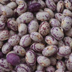 Bohnen - Saatgutsammlung