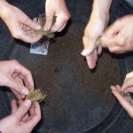 Regionale Nutzpflanzenvielfalt: Saatgut in Bürgerhand