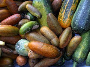 Ernte 2015 - Vielfalt im Samengarten
